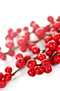 Holly Posters - Red Christmas berries Poster by Elena Elisseeva