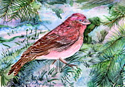 Pine Needles Drawings Posters - Red Finch Poster by Mindy Newman