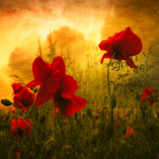 Poppies Photos - Red For Love by Philippe Sainte-Laudy