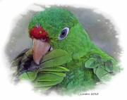 Costa Digital Art Prints - Red Lored Parrot Print by Larry Linton