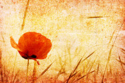 Old Map Originals - Red Poppy by Christophe ROLLAND