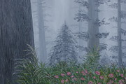 Giant Sequoia Paintings - Redwoods In Fog by William Ohanlan