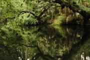 Florida State Prints - Reflection on Hillsborough River Print by Gregory Colvin