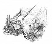 Hiding Drawings Prints - Reggie the Rat Print by Judith Angell Meyer