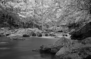 Richland Creek Photos - Richland Creek by David Troxel