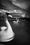 Boating Lake Prints - Ride On Swans In The Pickie Fun Park In Bangor County Down Print by Joe Fox