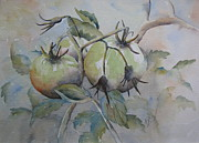 Ripening On The Vine Print by Ramona Kraemer-Dobson