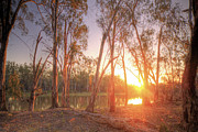 Murray Prints - River Murray Sunset Print by Mark Richards