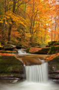 Autumn Framed Prints - River Rapid Framed Print by Evgeni Dinev