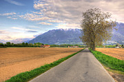 Mountain Road Prints - Road and trees Print by Mats Silvan
