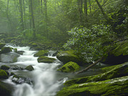 North Fork Prints - Roaring Fork River Flowing Print by Tim Fitzharris