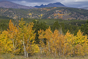 Fall Art - Rocky Mountain Autumn View by James Bo Insogna
