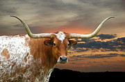 Texas Longhorn Photos - Rolling Thunder by Robert Anschutz