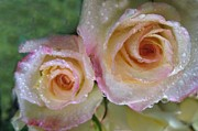Mauve Roses Photo Acrylic Prints - Romance 3 Acrylic Print by Shirley Sirois