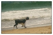 Dog Beach Card Framed Prints - Romp On The Beach Framed Print by Susan  Lipschutz