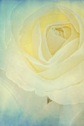 Nature Paint Posters - Rose Poster by Kristin Kreet