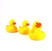 Rubber Prints - Rubber Ducks Print by Photo Researchers, Inc.