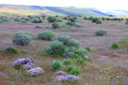 Washington Art - Sagebrush and Wildflowers by Carol Groenen