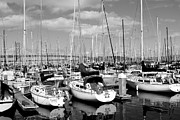 Black And White Photographs Photos - Sail Boats at San Francisco China Basin Pier 42 With The Bay Bridge in The Background . 7D7666 by Wingsdomain Art and Photography