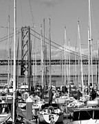 China Basin Prints - Sail Boats at San Francisco China Basin Pier 42 With The Bay Bridge in The Background . 7D7683 Print by Wingsdomain Art and Photography