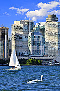 Swan Art - Sailing in Toronto harbor by Elena Elisseeva