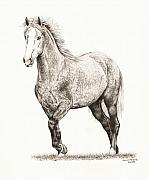Wild Horse Drawings - Salem by Lorrie Kalena