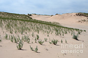 Sand Dunes Framed Prints - Sand Dunes Framed Print by Ted Kinsman