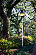 Lamp Post Framed Prints - Savannah Spring Perspective Framed Print by Carol Groenen