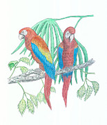 Macaw Drawings - Scarlet Macaw by Richard Freshour