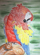 Amazon Parrot Paintings - Scarlet Macaw by Tim Forrester