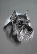 Pair Pastels Framed Prints - Schnauzer Framed Print by Patricia Ivy