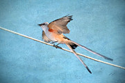Textured Bird Posters - Scissor-tailed Flycatcher Poster by Betty LaRue