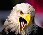 Screaming Posters - Screaming Eagle II Poster by Bill Dodsworth