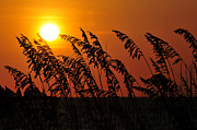 Oats Prints - Sea Oats at Sunset Print by David Lee Thompson