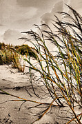 Sea Oats Photo Framed Prints - Sea Oats Framed Print by Kristin Elmquist
