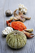 Ocean Creatures Photos - Sea treasures by Elena Elisseeva