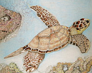 Troy Howell - Sea Turtle2