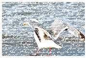 Sea Birds Framed Prints - Seagull Framed Print by Debra  Miller