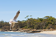 Sympathy Metal Prints - Seagull Spreads Its Wings On The Beach Metal Print by Ulrich Schade