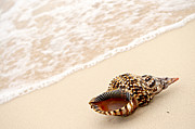 Vacation Prints - Seashell and ocean wave Print by Elena Elisseeva