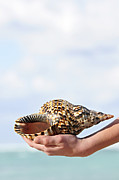 Sea Shell Metal Prints - Seashell in hand Metal Print by Elena Elisseeva
