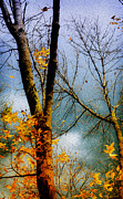 Yellow Leaves Framed Prints - Season Ending Framed Print by Julie Palencia