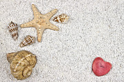Shell Texture Posters - Seastar And Shells Poster by Joana Kruse