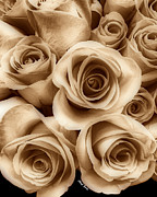 Boutique Art Posters - Sepia Roses Poster by Cheryl Young