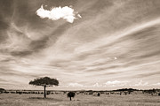 Duotone Framed Prints - Serengeti Skies Framed Print by TB Sojka