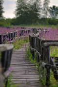 Nina Stavlund - Serenity Walk...