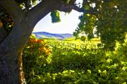 California Vineyard Digital Art Prints - Shady Vineyard Print by Patricia Stalter