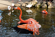 Flamingo Gardens Photography - Show Off by Carmen Del Valle