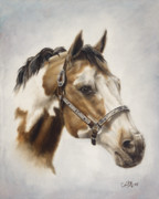 Pinto Horse Paintings - Show Off by Cathy Cleveland