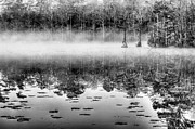 Alligators Photos - Shrouded by JC Findley